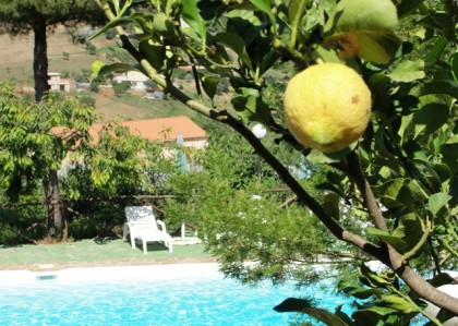citron-o-pool